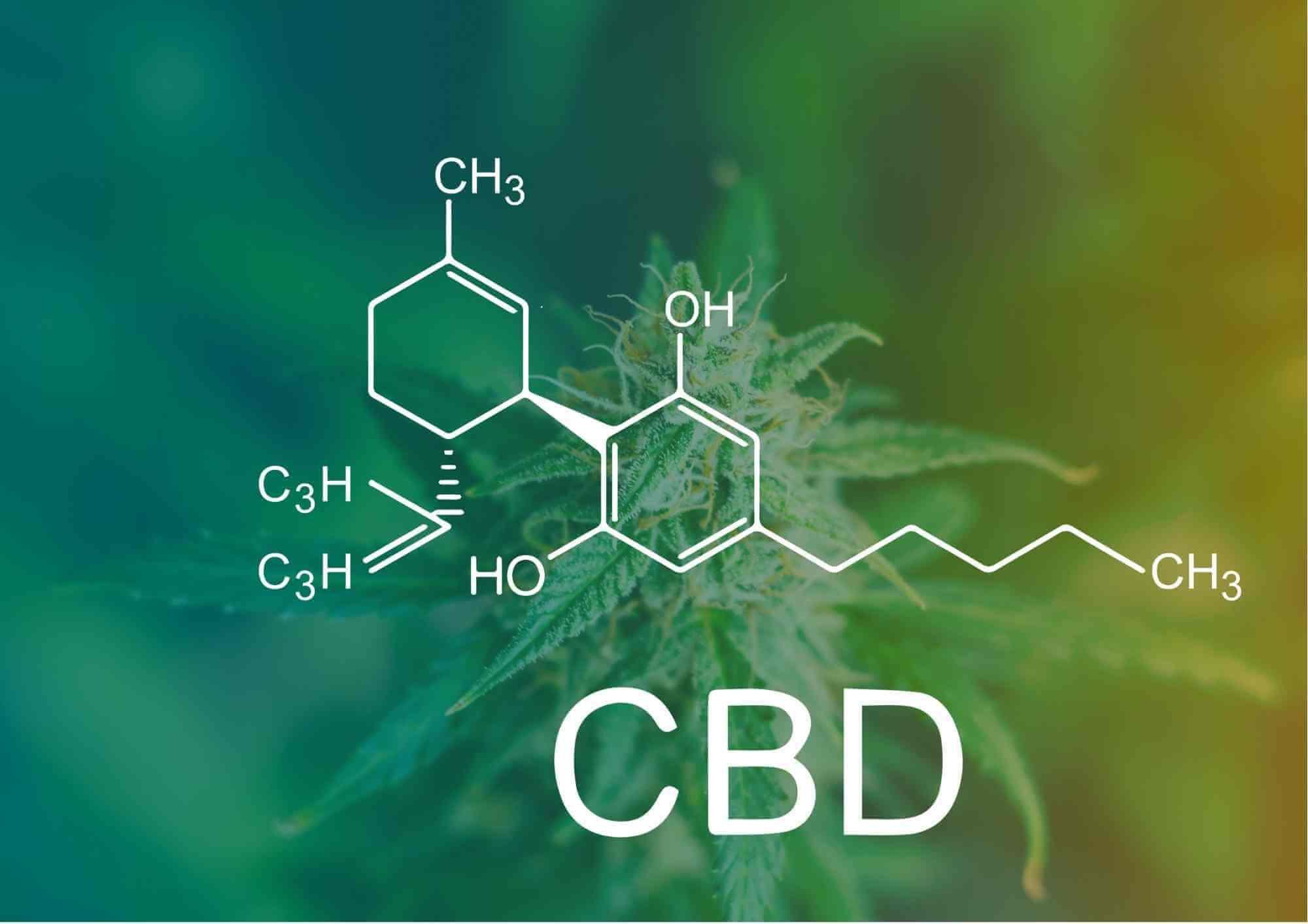 układ endokannabinoidow